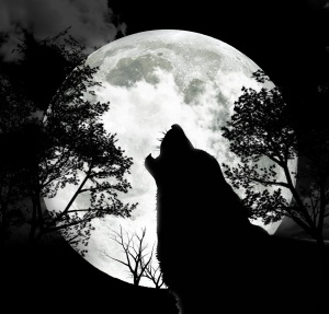 wolf-howling-at-the-moon1
