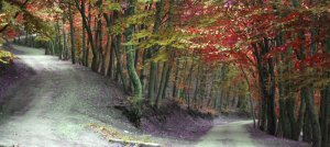 two_roads_by_jelly_bon